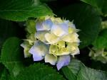 Brunelle Flowers